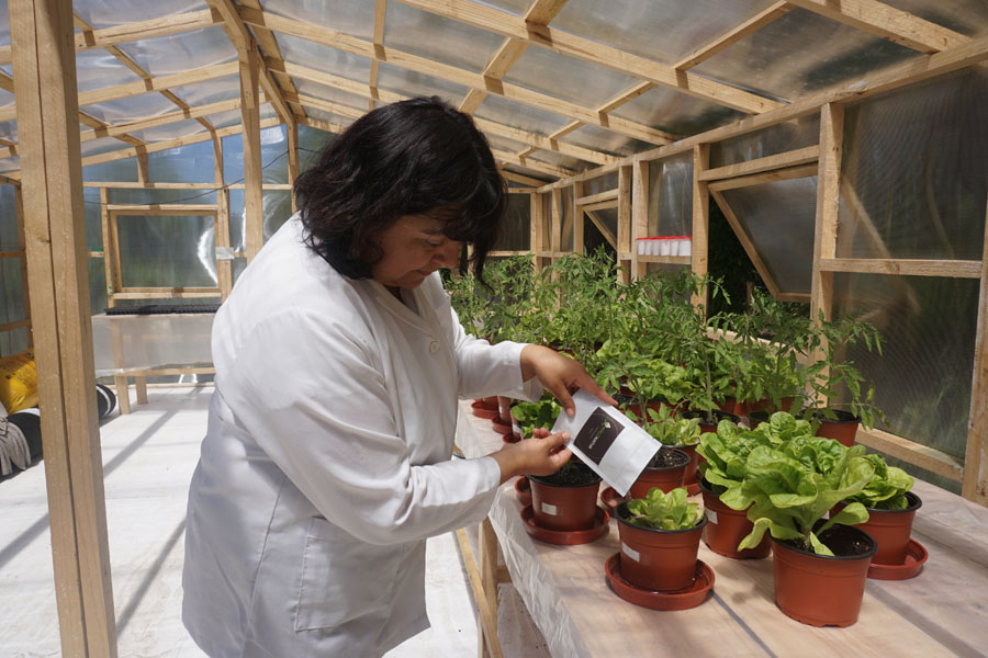 UFRO Innovation – First fungi-based fertilizer developed in Chile